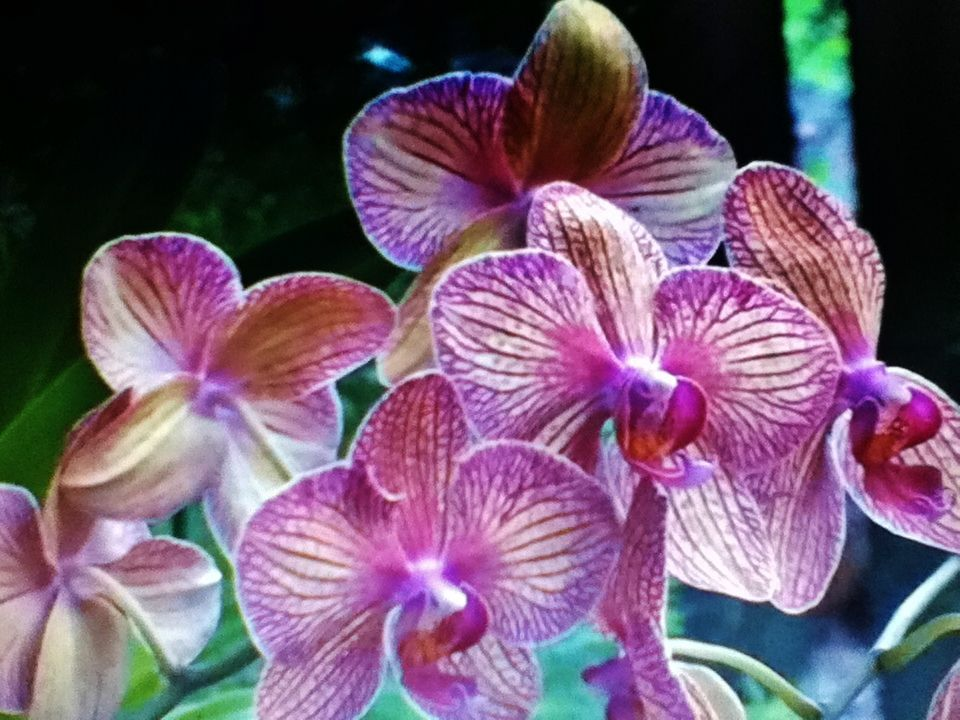Orchid World