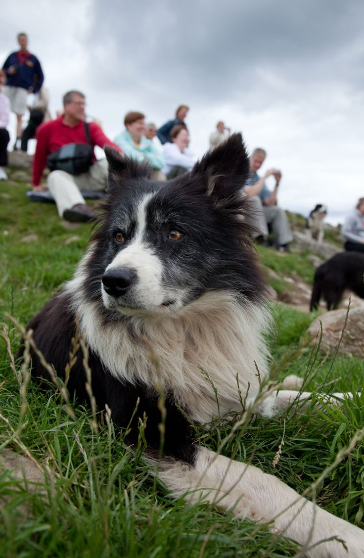 Visit A Working Sheep Farm And Pet The Sheepdogs In The