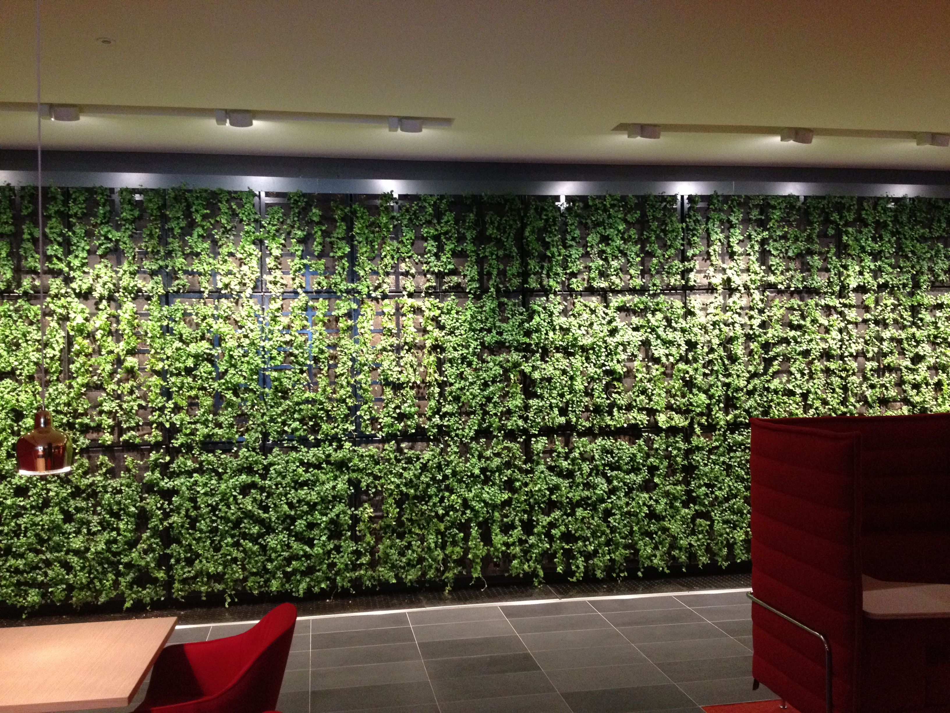 Making A Living Wall