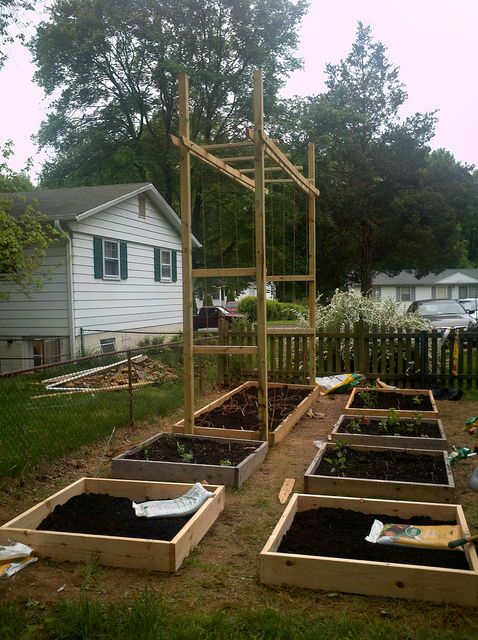 Hop trellis with raised bed new house pinterest hops for Hops garden designs