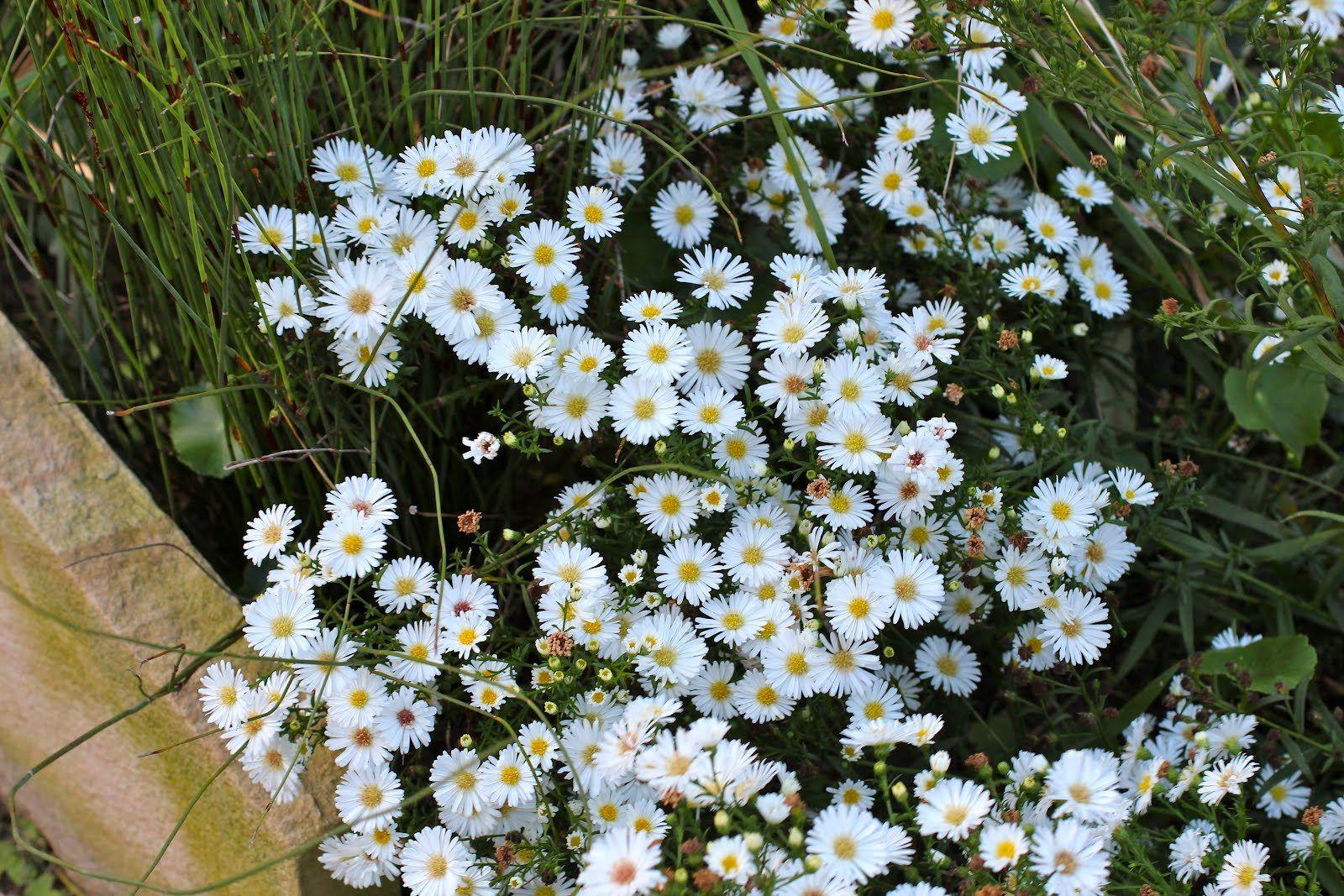 Pin On Actual Garden