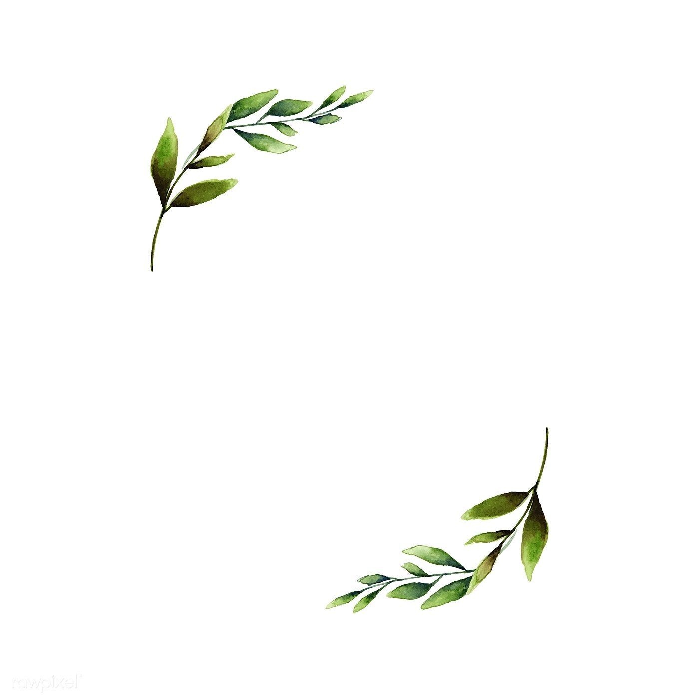 Download Premium Vector Of Hand Drawn Olive Branch Frame Watercolor Style How To Draw Hands Olive Branch Tattoo Olive Branch