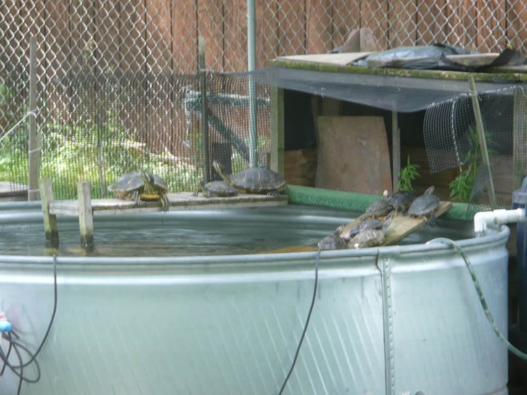 Blog Of A Guy That Built His Own Outdoor Red Ear Slider