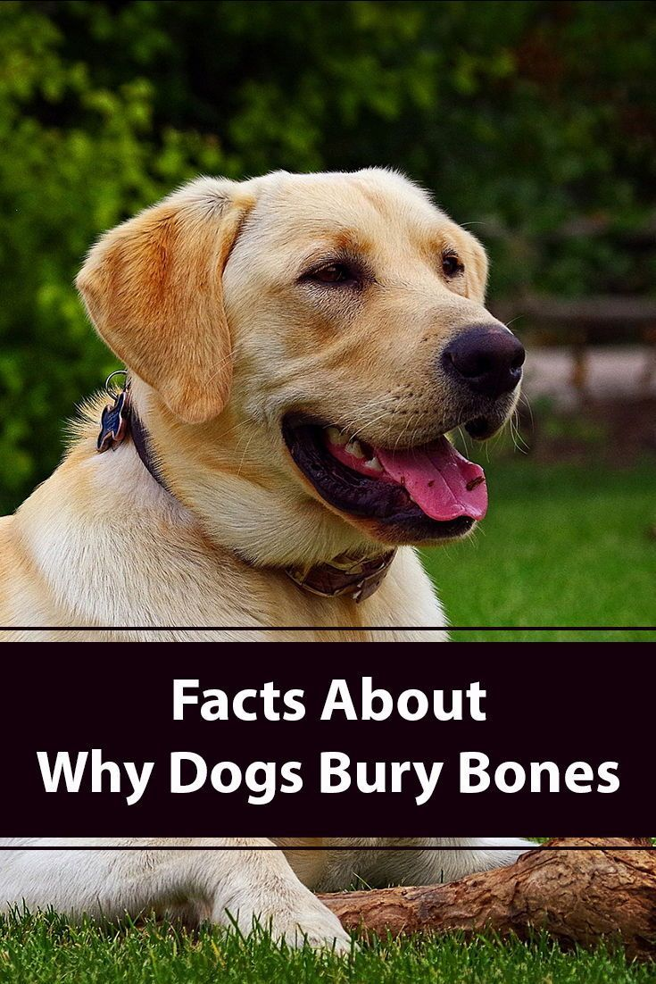 Why Do Dogs Bury Bones? | Dogs, Training your dog, Dog ...