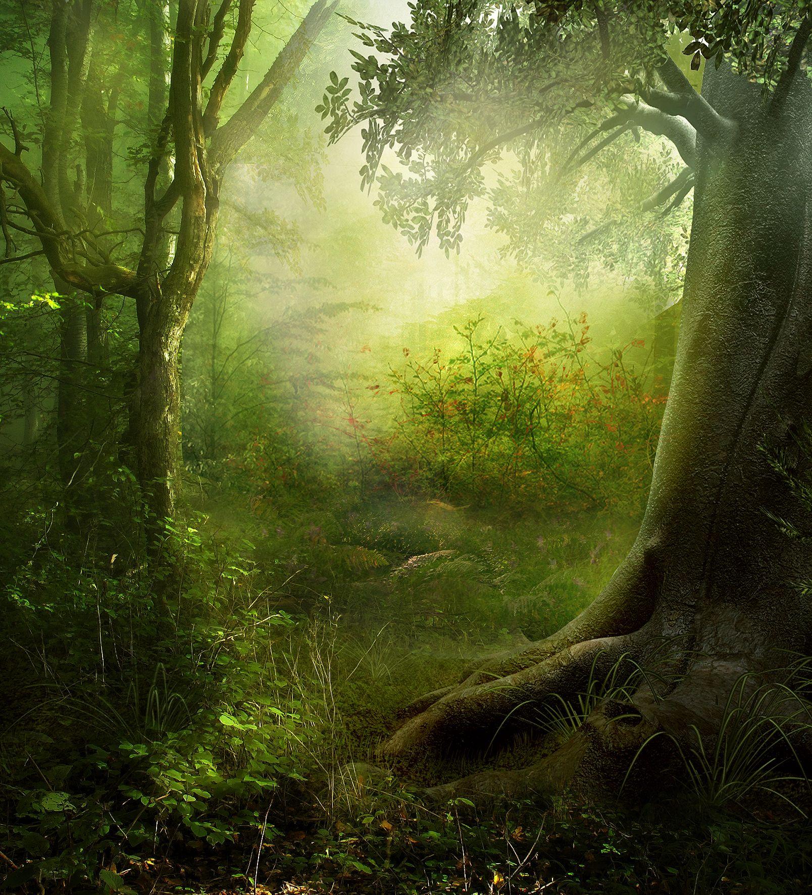 Сказочный лес картинки для фотошопа, открытка сделать