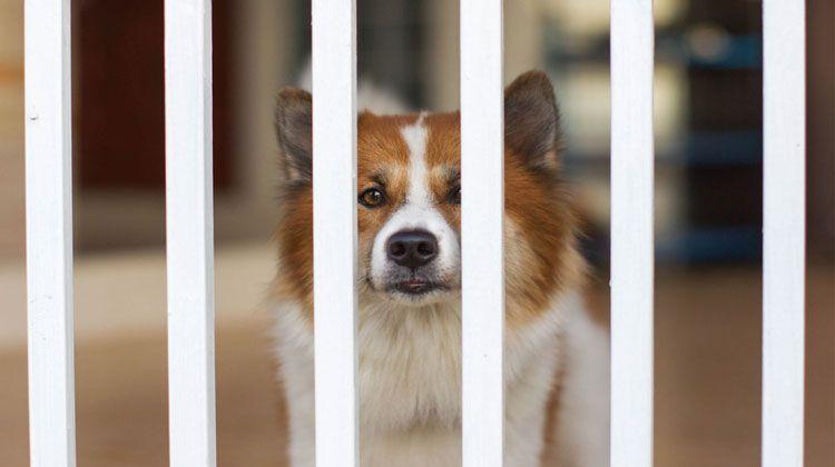 Dog Gates Buying Guide And Reviews Dog Gate Indoor Dog Gates Indoor Dog