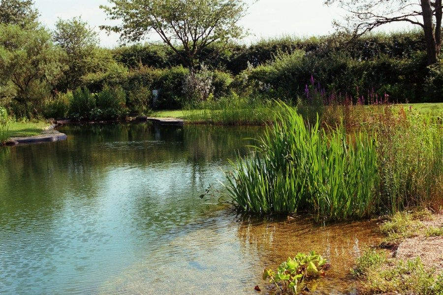 Swimming Pond Conversions from Ponds & Lakes