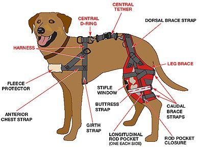 Dog Brace Get Domain Pictures Getdomainvids Com Dog Braces