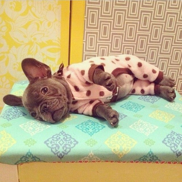 Ready For Bed In Our New Pj S Cute Puppy Puppies Frenchie