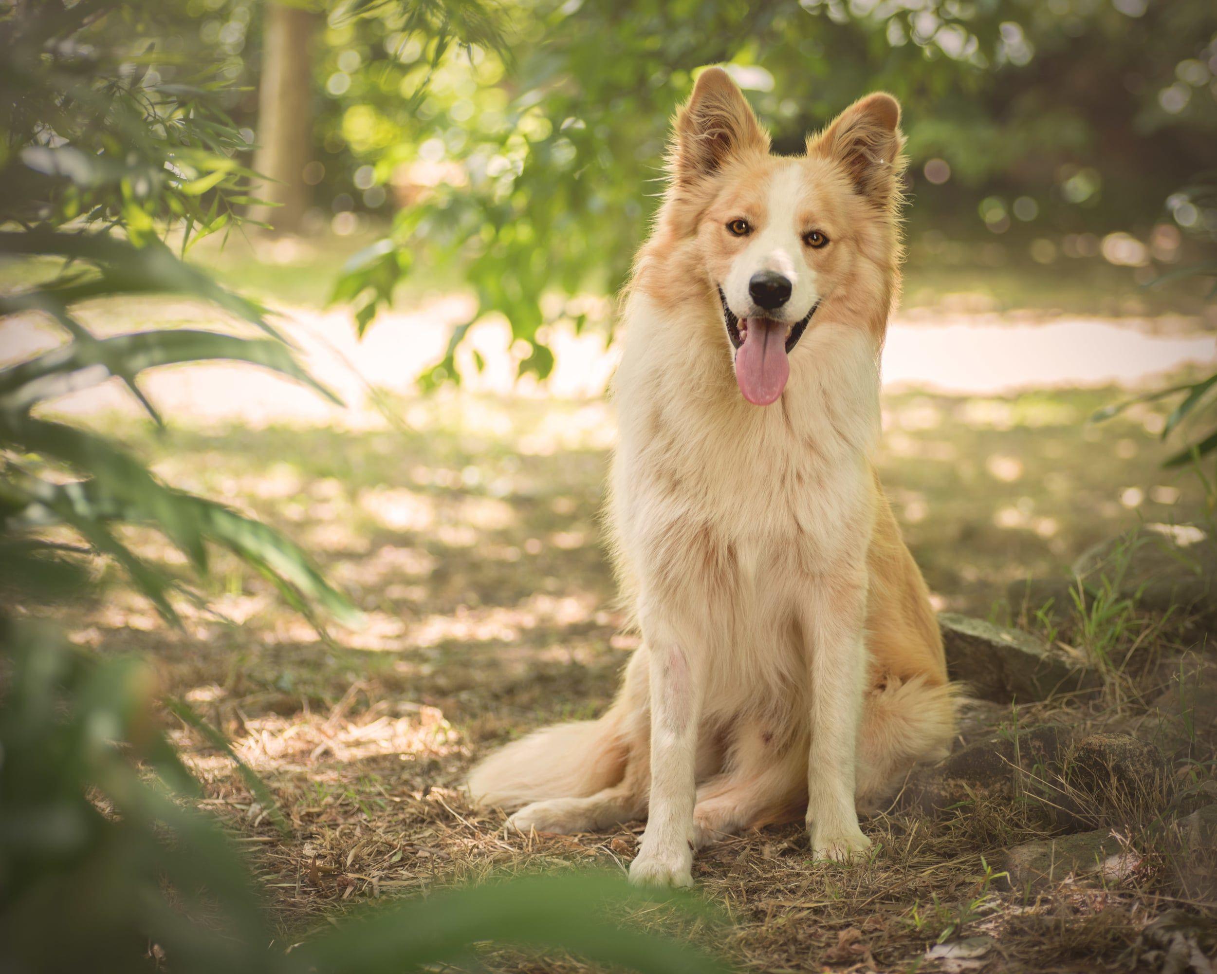 Portfolio Animal Photography Dog Photography Pets