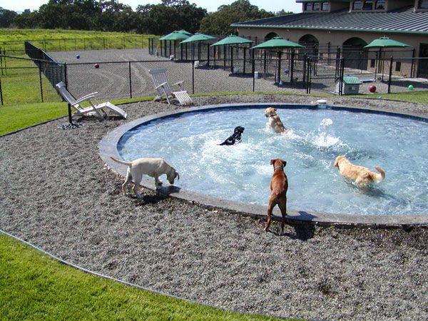 http://www.tappenhill.com/images/pups-at-pool.jpg