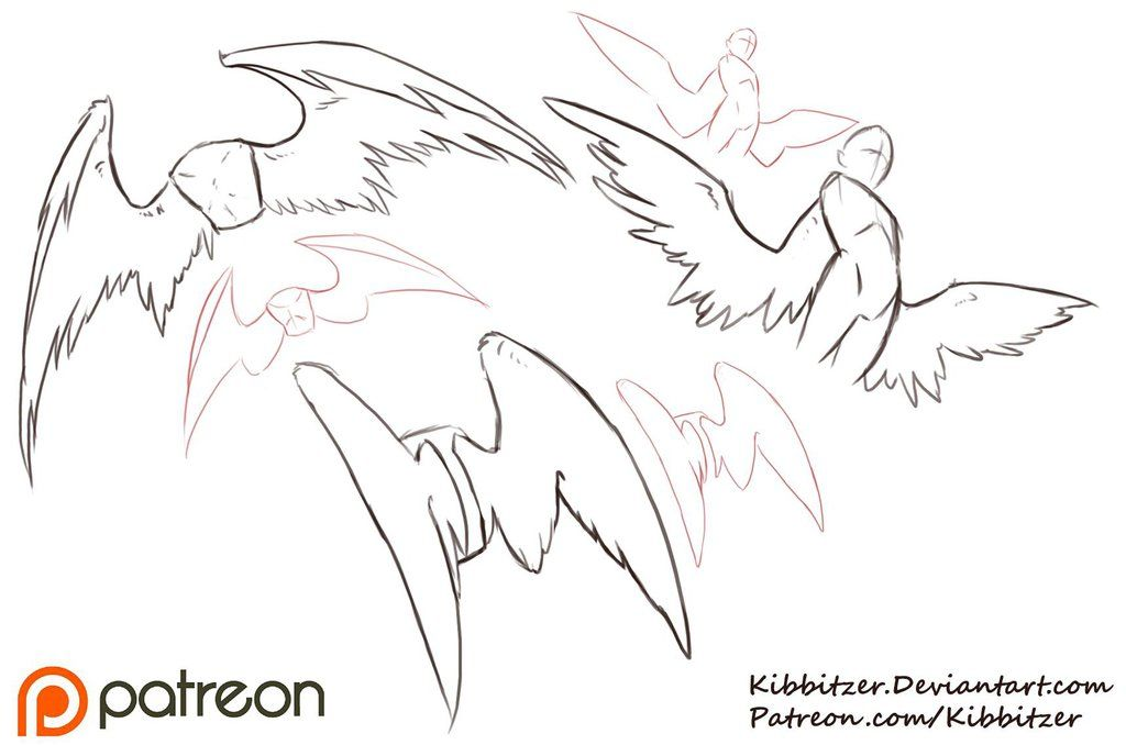 Photo of Wings Reference Sheet by Kibbitzer on DeviantArt
