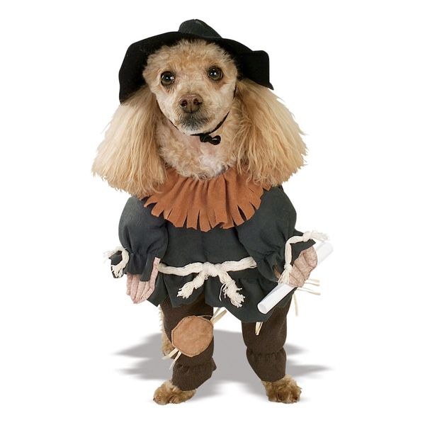 Wizard Of Oz S Scarecrow Dog Halloween Costume Pet Costumes