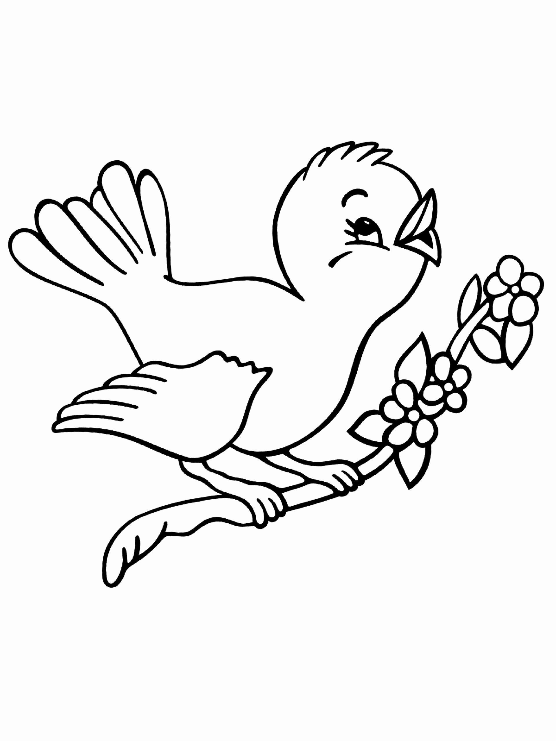 Ausmalbilder Vögel Im Frühling