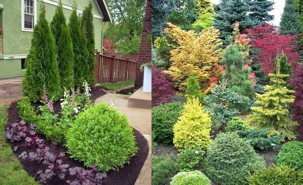 conifer garden ideas brilliant evergreen landscaping ideas