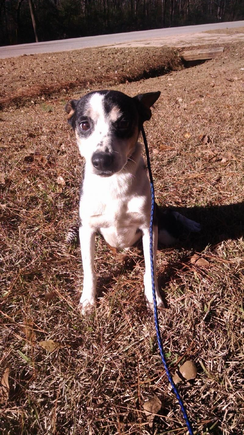 Adopt Cody on Terrier mix dogs, Adoption, Pets