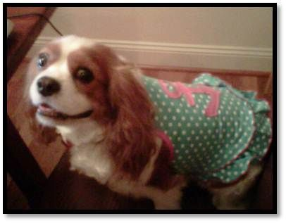 My dog, Mochi, should be Avalon's Pet of the Month! She is a King Charles Cavalier & 6 years old. She acts like a real baby, she loves to wear clothes, waits for her dinner at the dinner table and sleeps like a human! She is the sweetest dog who just loves to be loved :) She wears swimsuits, pjs and holiday sweaters. We would be so excited for Mochi to win Avalon's pet of the month!