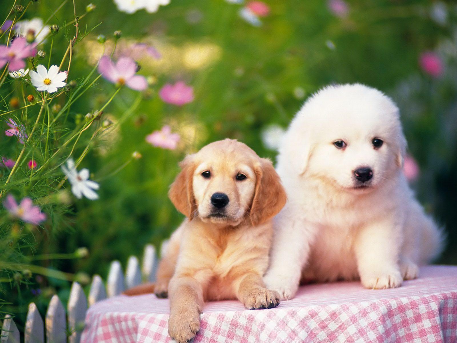 fotos de perros lindos y tiernos Buscar con Google