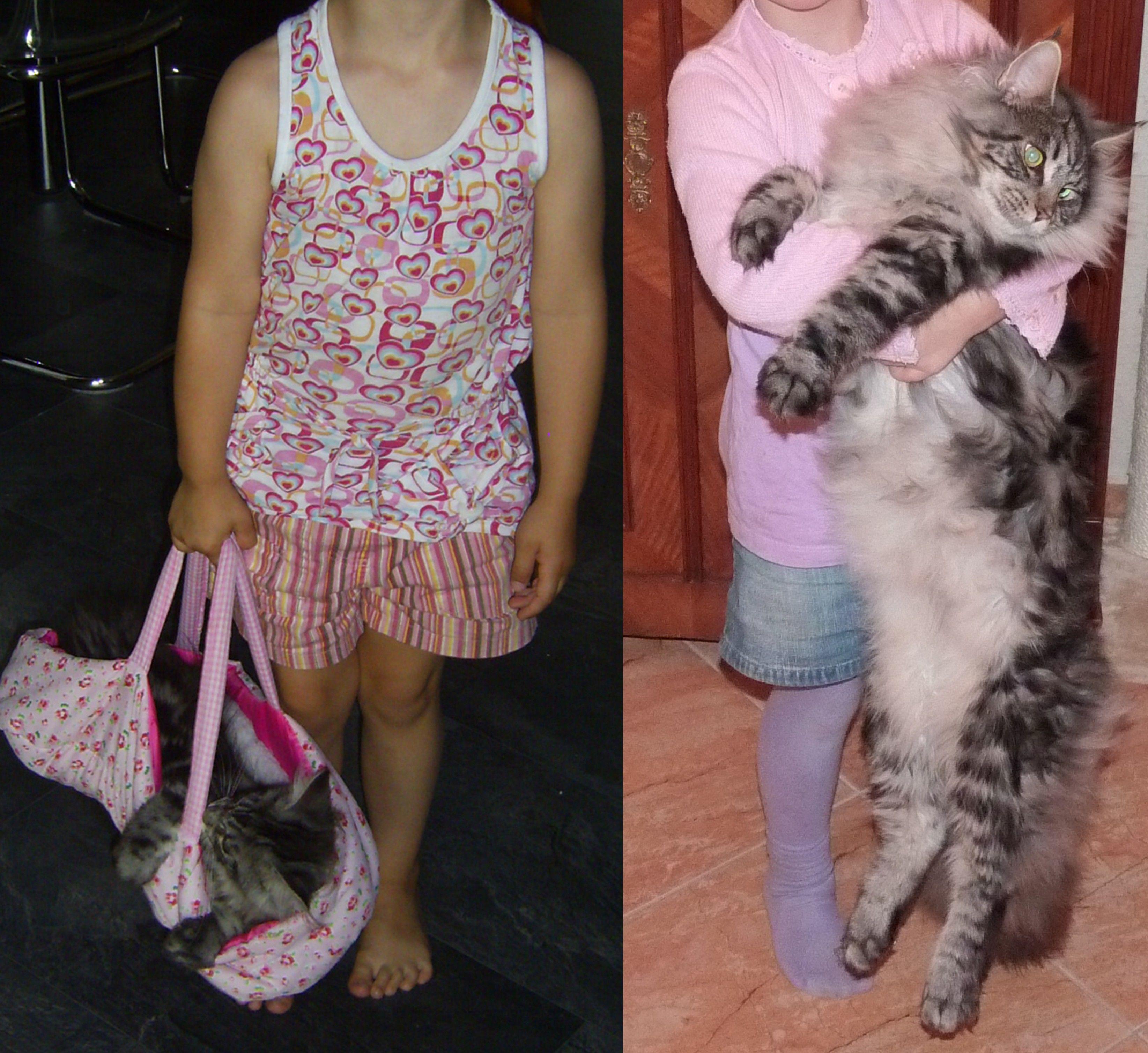 33 besten Savannah Katze Bilder auf Pinterest