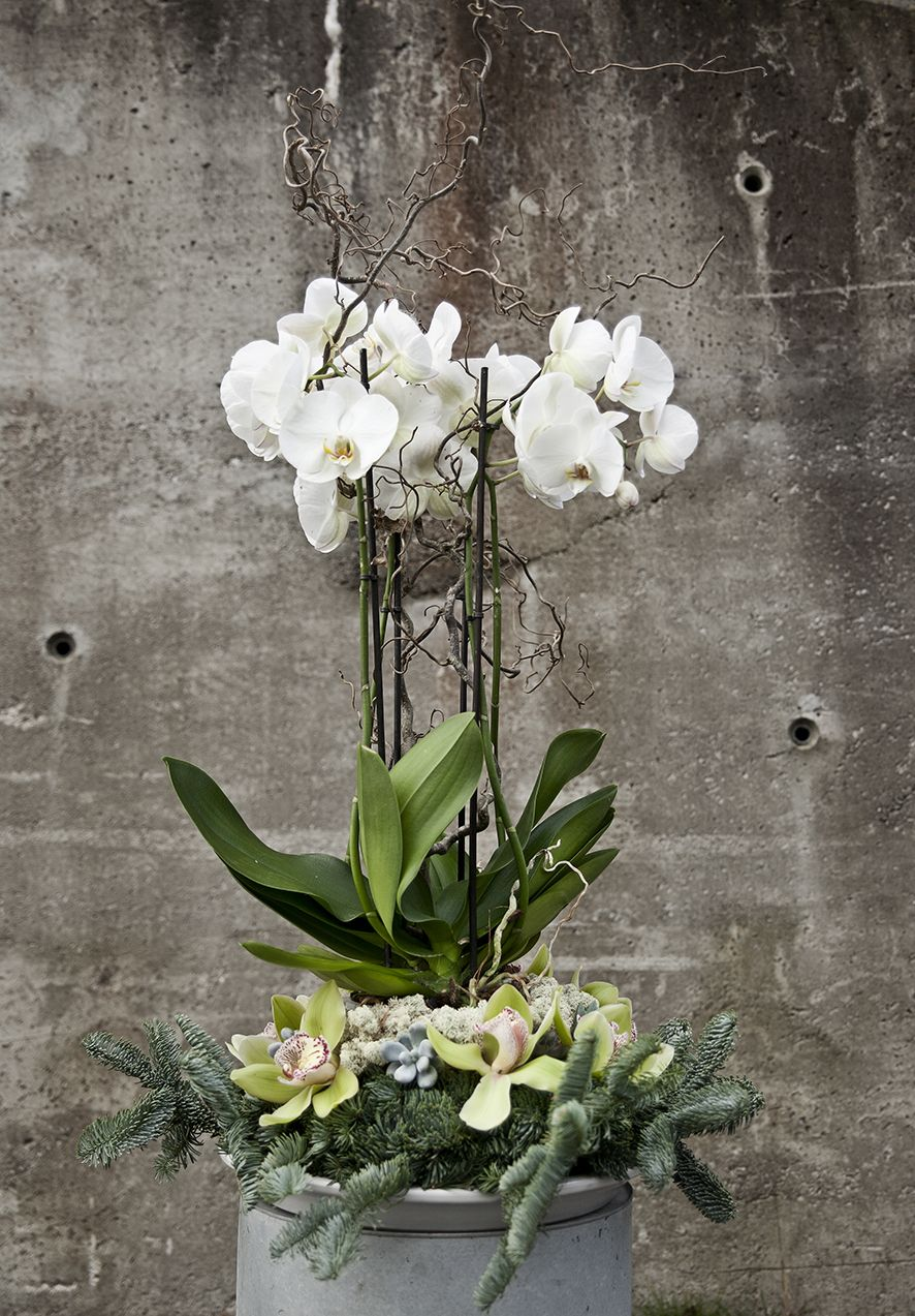 stor orkide