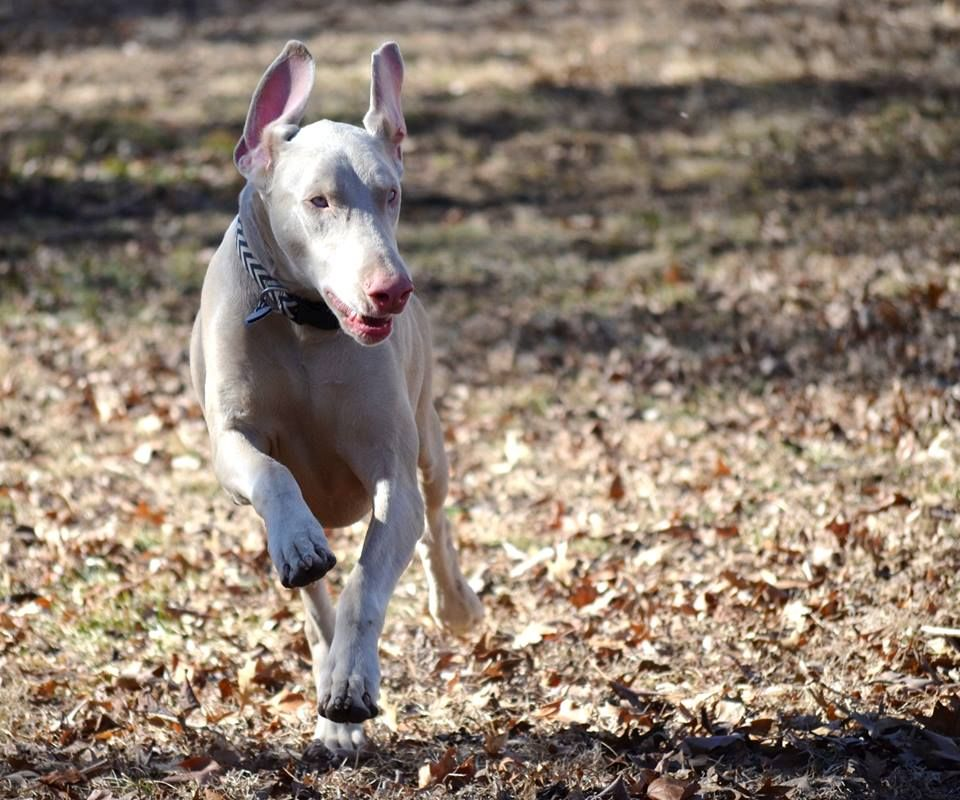 Good Stuff Happened Today Rottweiler Rottweiler Puppies