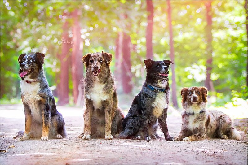 - Raa Family - by AppyNinja.deviantart.com on @DeviantArt
