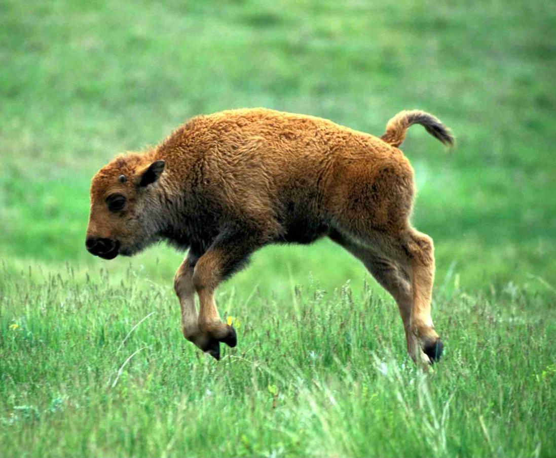 Cutest Pics of Baby Wild Animals | Dieren(wereld ...