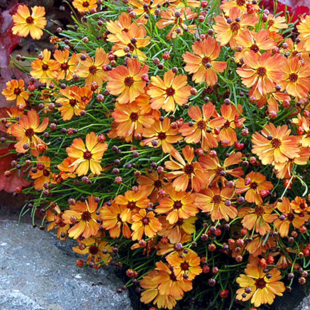 Beautiful fall flowers to plant in your garden 78 best fall flower flower inspiring beautiful fall izmirmasajfo Image collections
