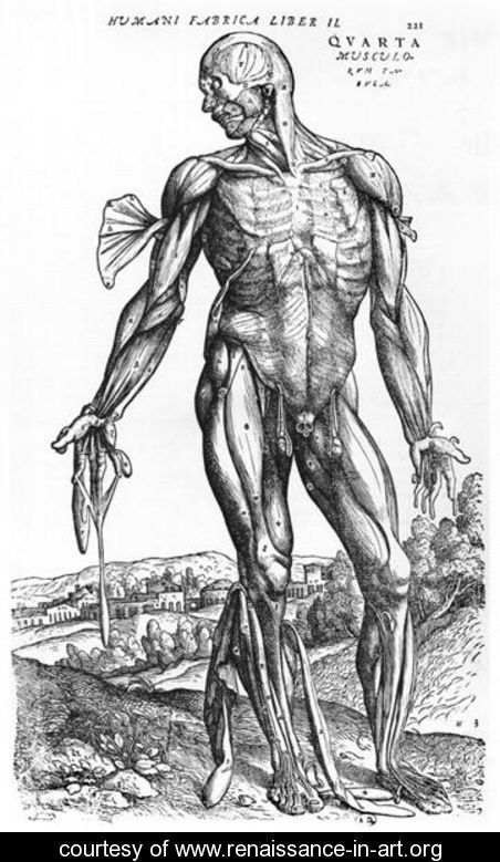 Anatomical Study, illustration from De Humani Corporis Fabrica by Andreas Vesalius 1514-64 Basel, 1543 - Andreas Vesalius - www.renaissance-in-art.org