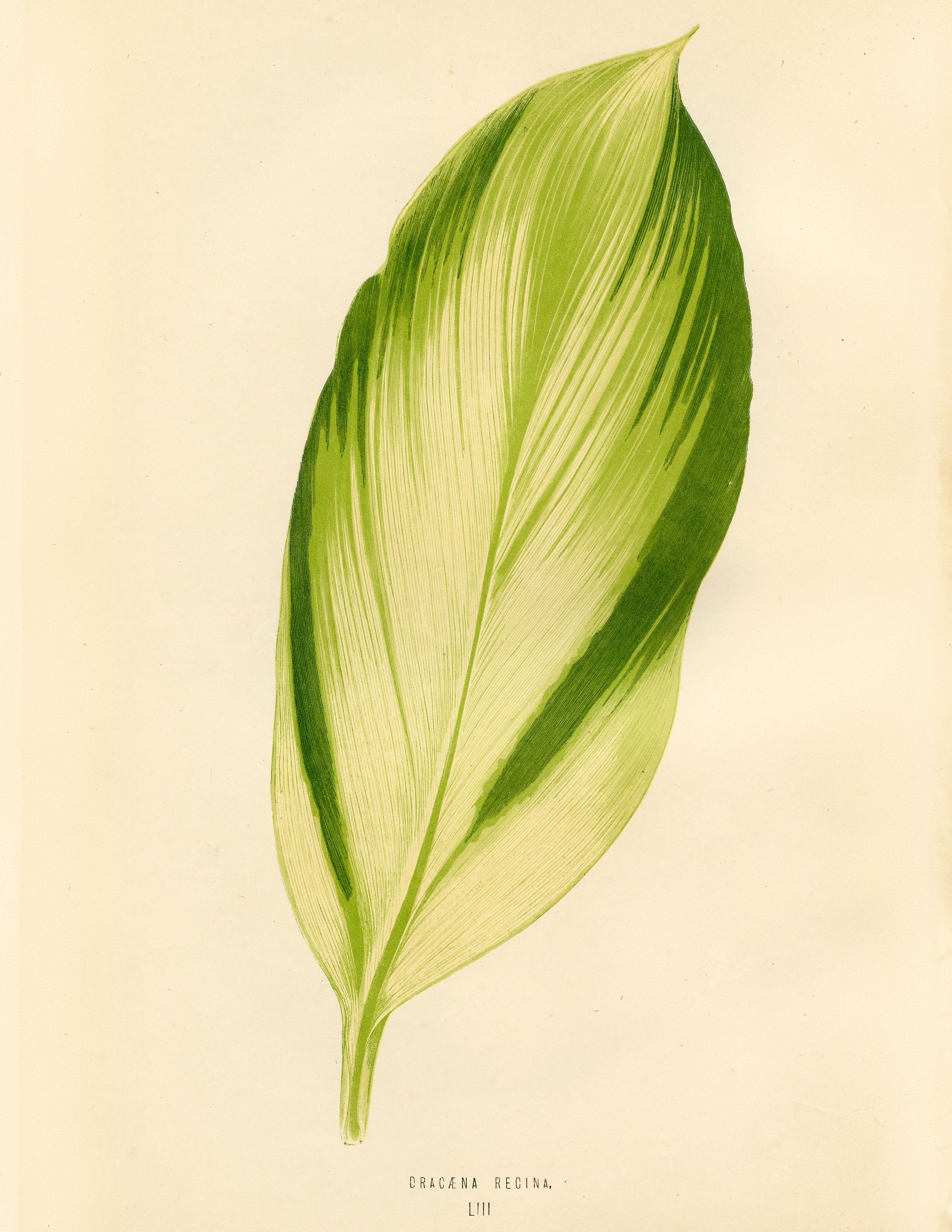 Gorgeous Green Tropical Leaf Download | Leaves, Graphics and ...