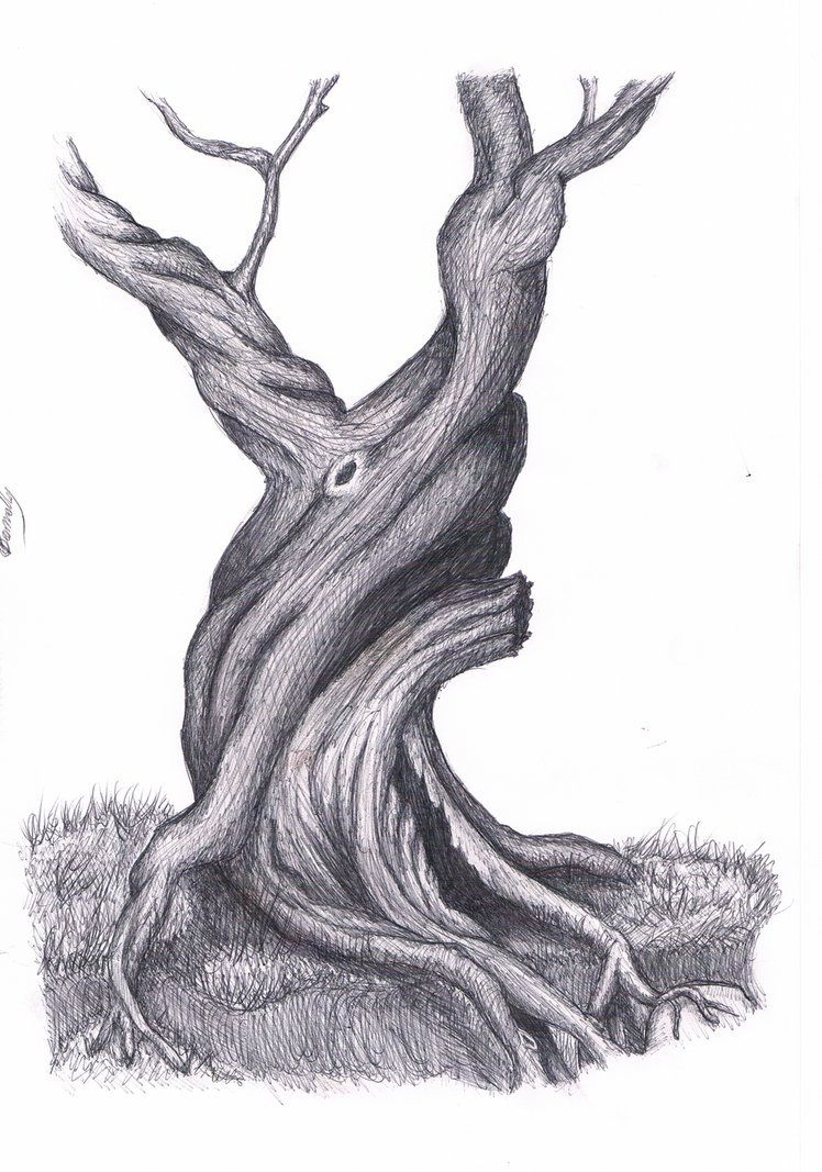 Old Tree Drawing By Lalupo On Deviantart With Images Tree