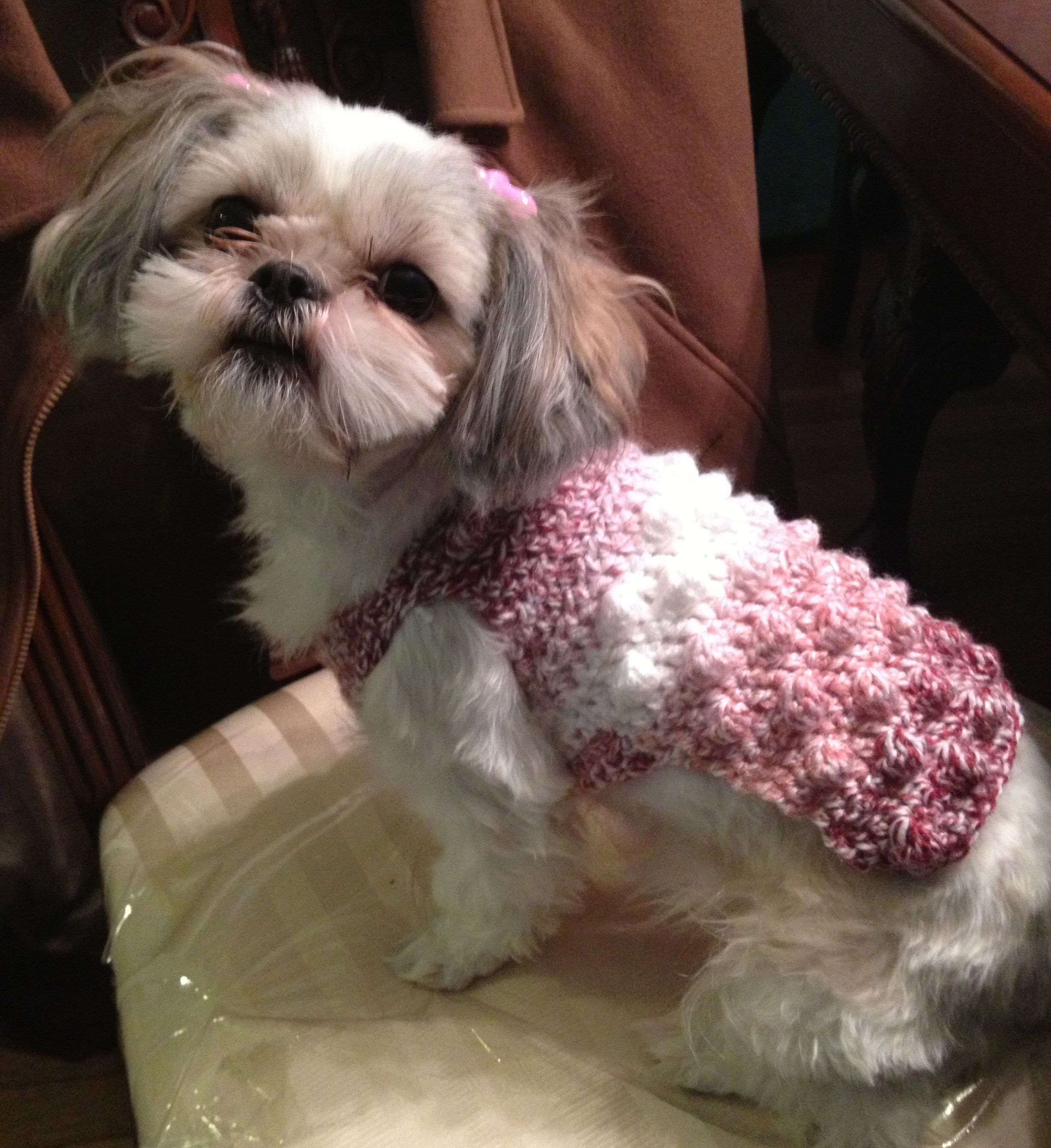 Shih Tzu In White And Raspberry Crochet Sweater Animal Sweater