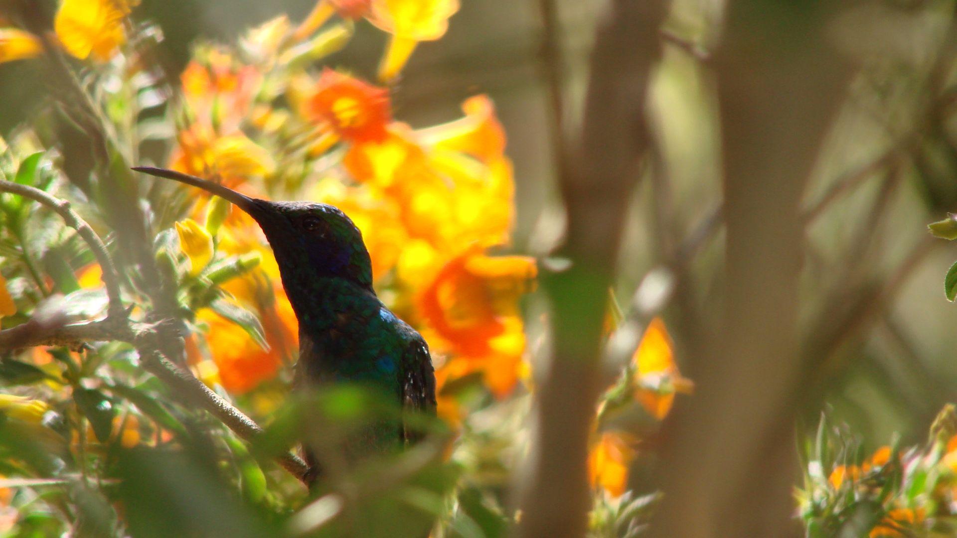 Un colibrí reflexiona