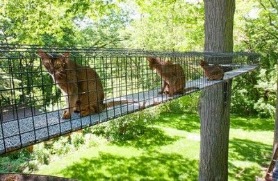 My Kitties Would Love This Must Have My Husband Build A Catio For My Fur Babies Outdoor Cat Tunnel Outdoor Cat Enclosure Cats Outside