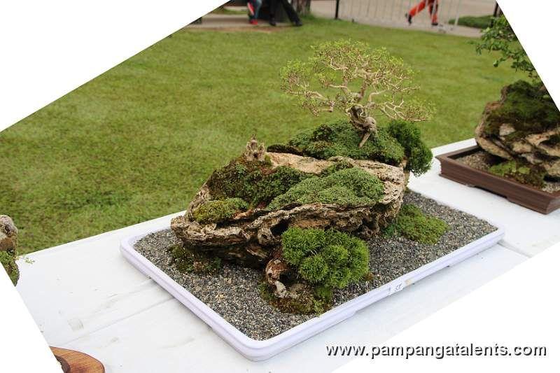 Http Www Pampangatalents Com 04 Gallery Bonsai Bonsai Show Landscape Slides Landscape Bonsai 14 Jpg Petits Jardins Petit Jardin Japonais Jardin Japonais