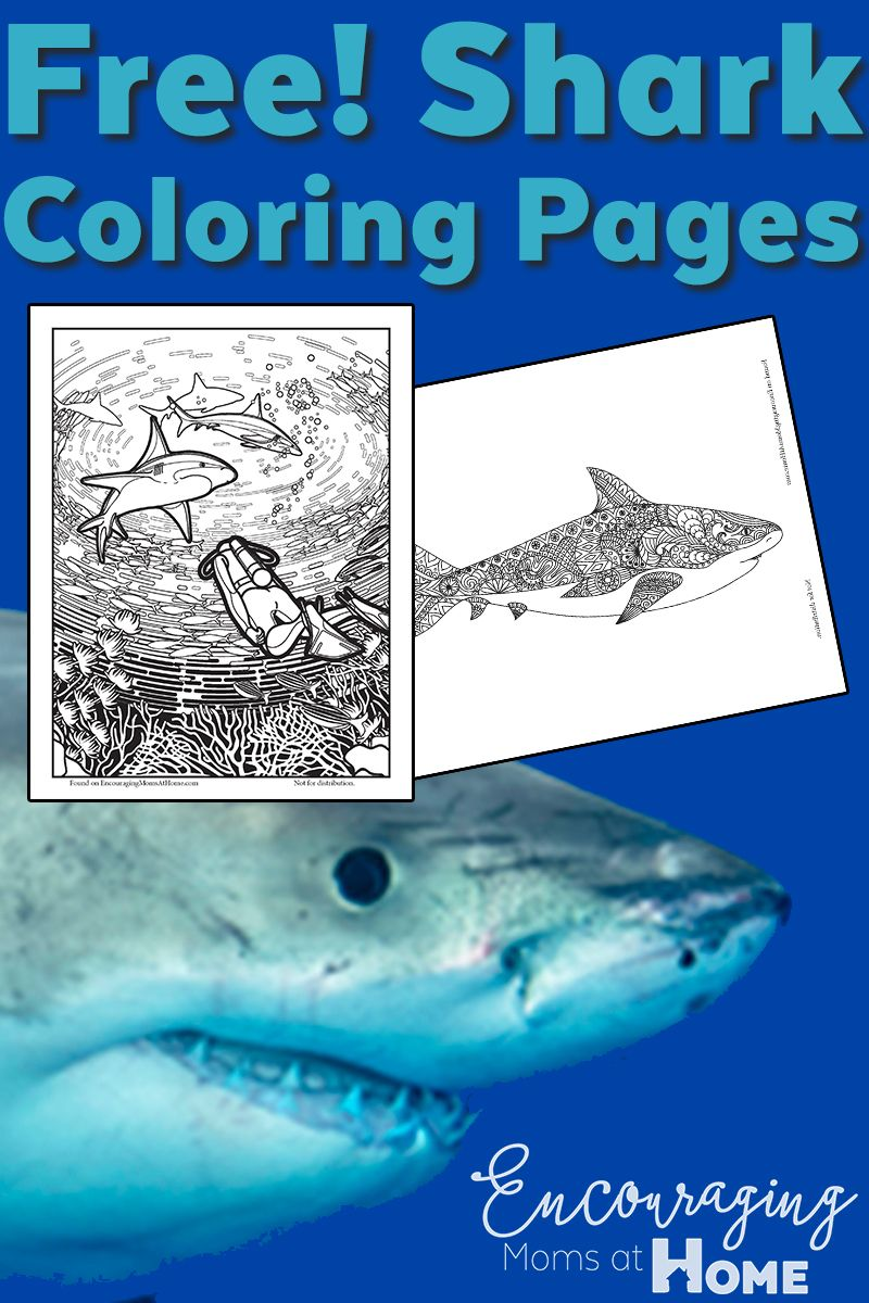 Free Shark Coloring Pages for Shark Week and More! | Shark, Free ...