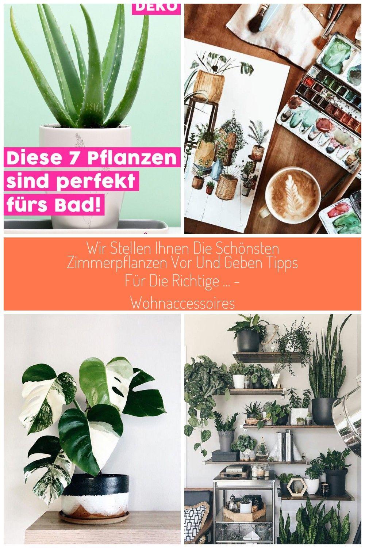 Pflanzen Machen Jeden Raum Wohnlicher Und Schner Doch Nicht Jede Pflanze Fhlt Sich In Jedem Raum Woh In 2020 Pflanzen Zimmerpflanzen Bilderwand