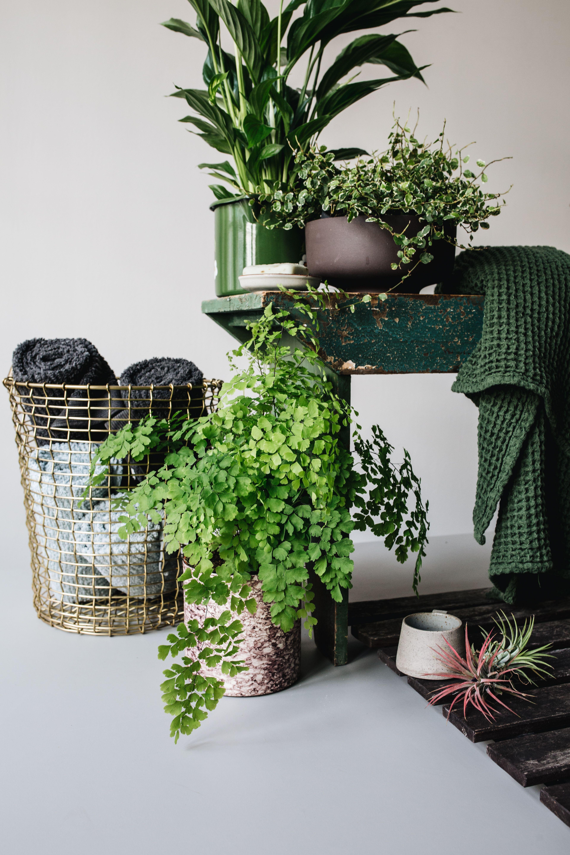 Badezimmerpflanzen Fur Den Mai Badezimmerpflanzen Pflanzen Und Zimmerpflanzen