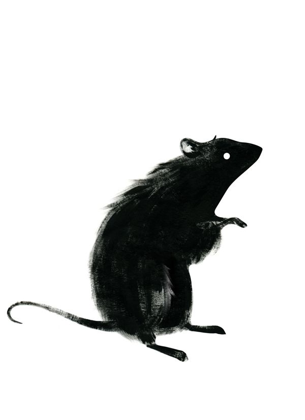Black Rat - Ingrid Alice … | Pinteres…