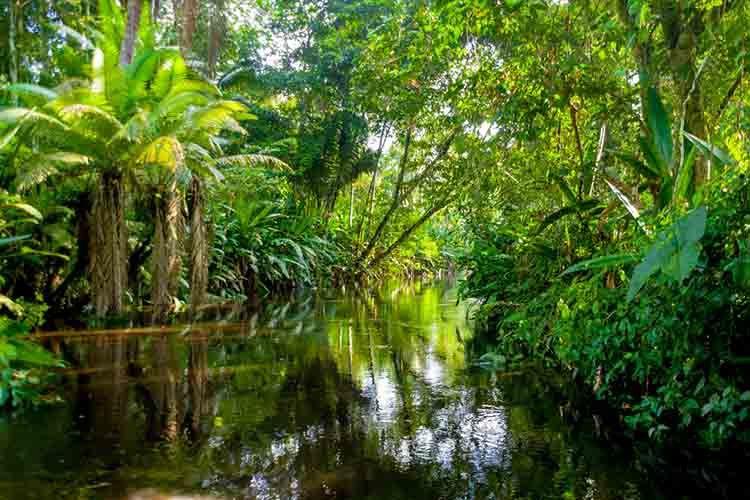 Amazon Rainforest With Unparalleled Biodiversity The Amazon