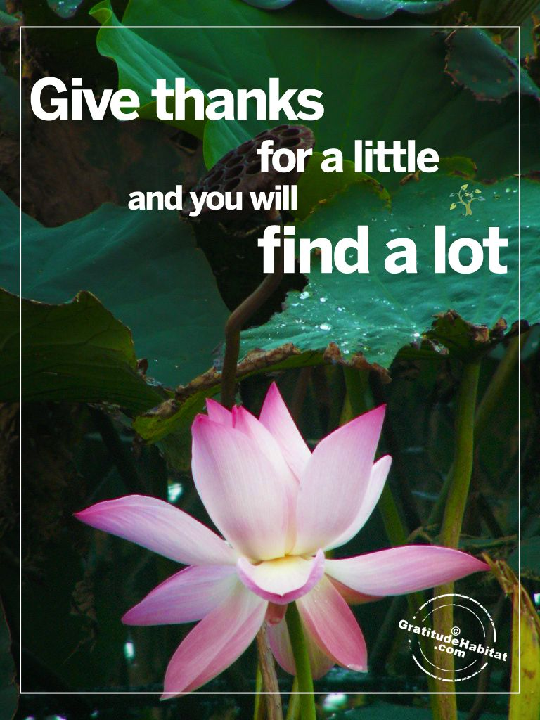 Giving Thanks Quotes Finding A Lot Visit Us At Www.gratitudehabitat #givingthanks .