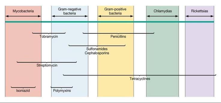 Erythromycin Antibiotic Spectrum