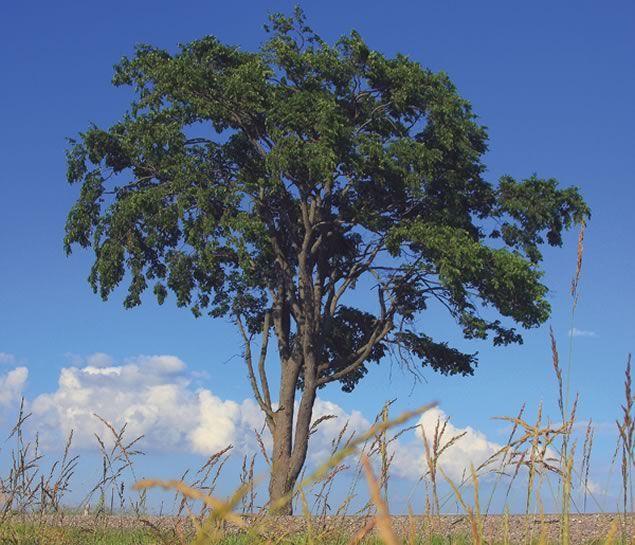 Trees Ontario - Google Search