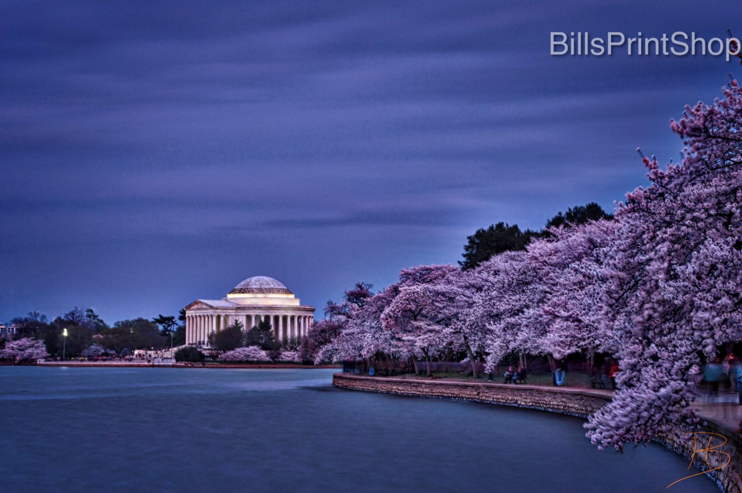 Jefferson Memorial In Bloom Washington Dc Cherry Blossoms Street Photography Wall Night Time Photography Virginia Photography Washington Dc Photography