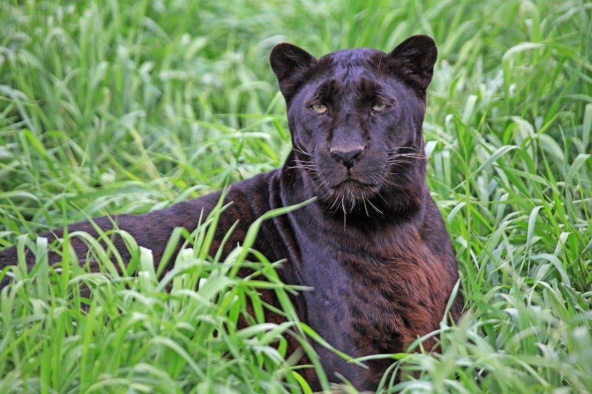 The Wild Animal Sanctuary - Google+