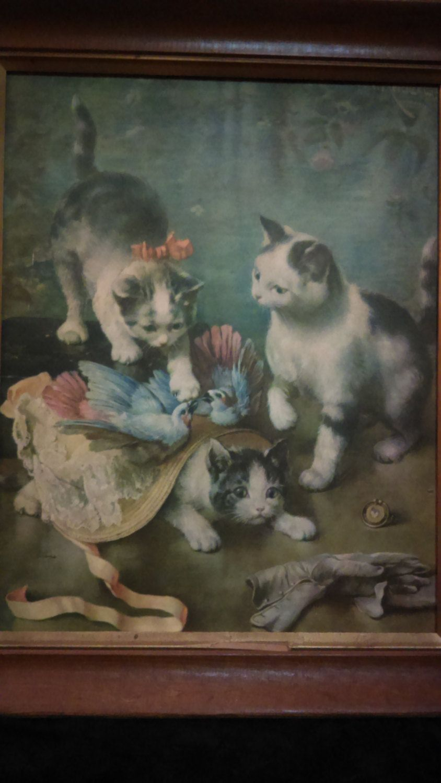 Kittens Reichert Kittens Reichert new pictures