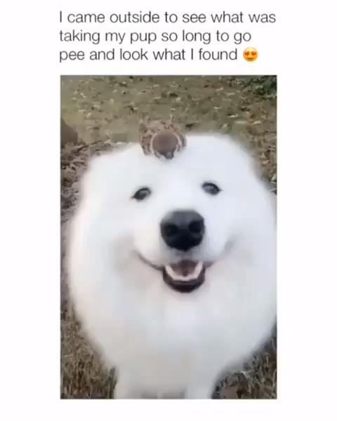 New Hilariously Funny Dog Memes For 2020 Marriagememesfunny Prettymemes Funnypervertmemes Sabadohumormemesch Funny Animal Videos Funny Animals Cute Animals