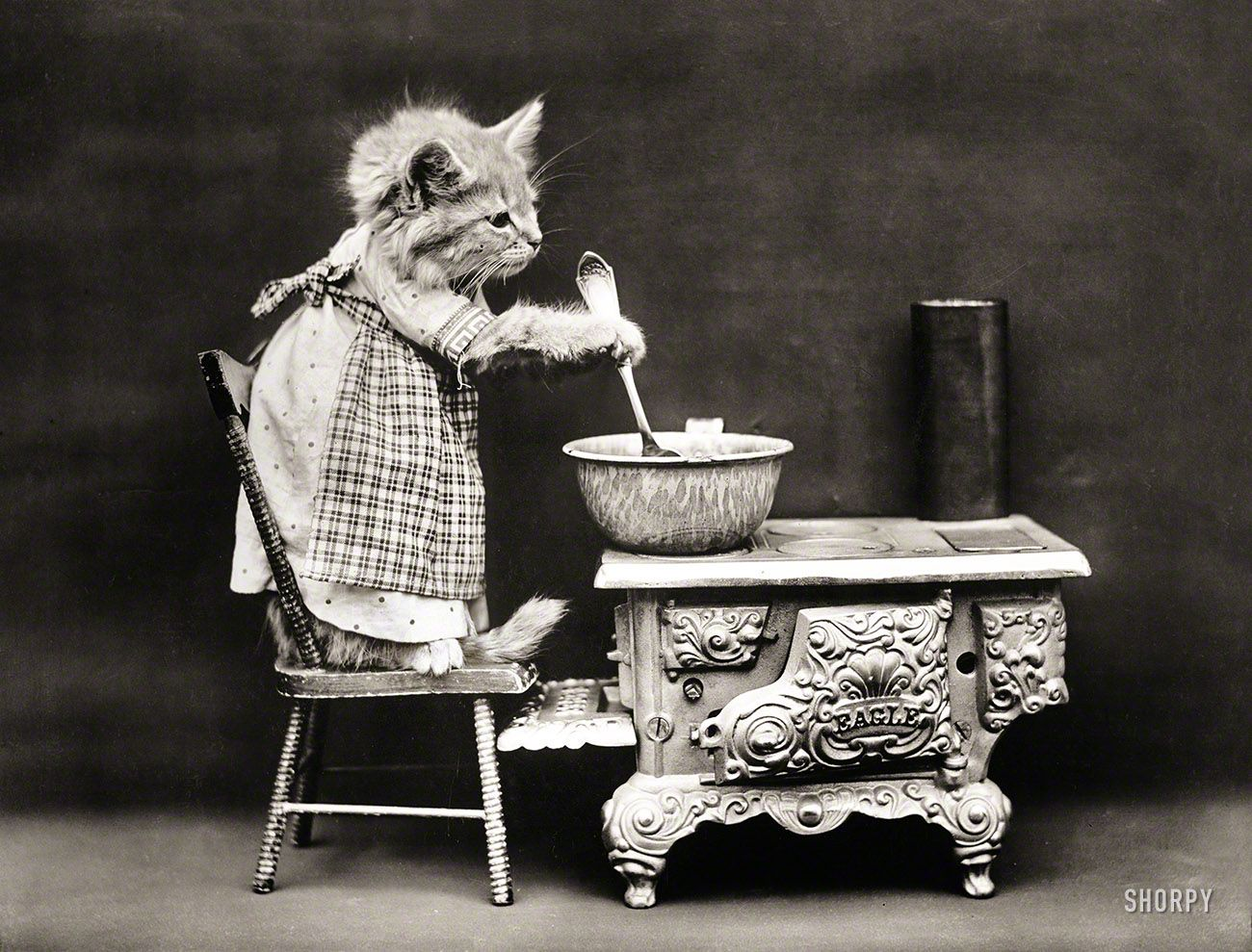 "Cat wearing apron, stirring pot on miniature stove."" As seen on the classic  cooking show Kitten Kitchen. Photo by Harry W. Frees… 