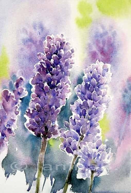 Lavendel Aquarell 22x15cm Peinture Fleurs Nenuphar Dessin Et