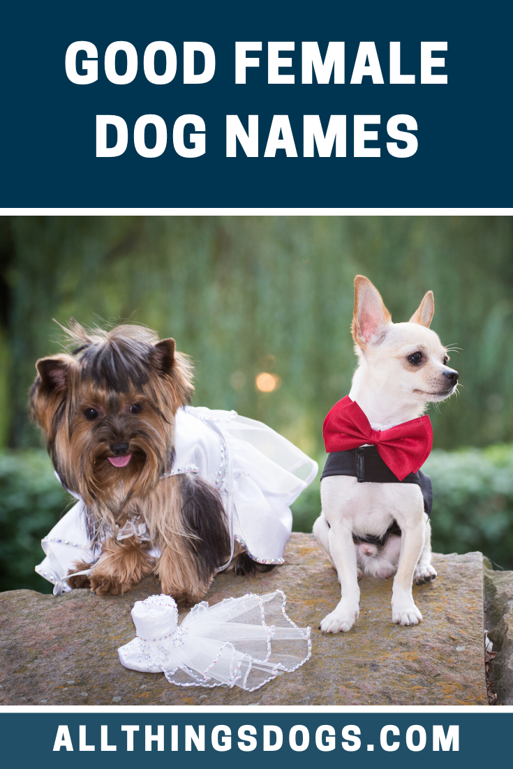 Good Female Dog Names Female Dog Names Dog Names Best Dog Names